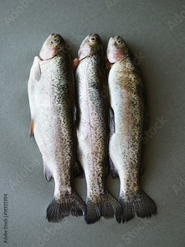 Three dead fish lying side by side