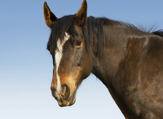Brown horse against sky, close-up of head