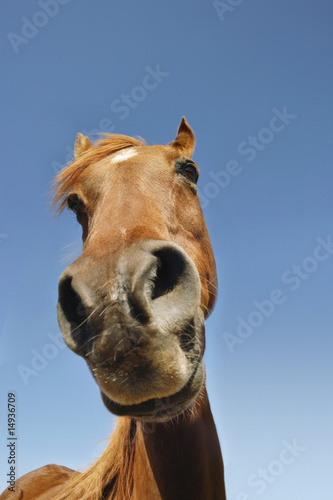 Brown horse against clear sky, low angle view, close-up of snout