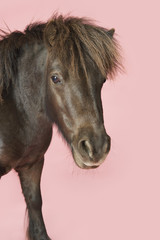 Brown horse on pink background