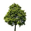 Baum komplett freigestellt