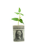 Sprout growing from dollar bill