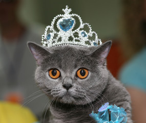 Cat with a diadem.