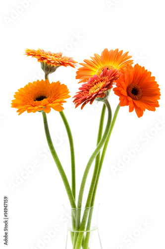 In de dag Gerbera Bouquet of Gerbera flowers isolated on white background