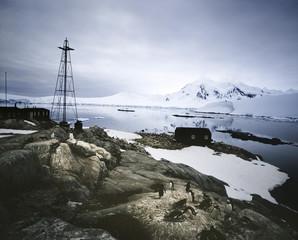 Penguins at Settlement