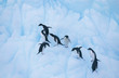 Penguins climbing on ice