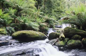 Australia, Queensland, stream in rainforest