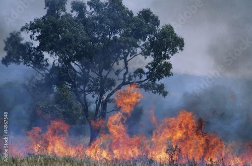 Australia, Bush fire