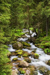 Forest Stream in Tatra Mountains