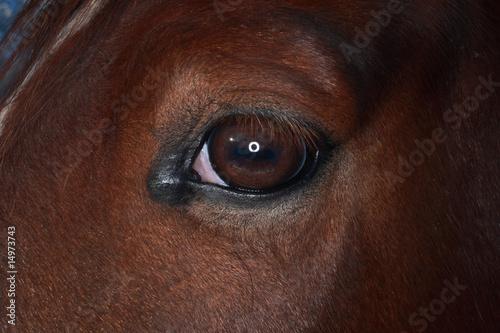 Fototapeten,pferd,auge,pferd,eye