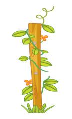 A creeping or climbing plant