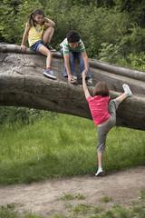 Three friends 7-9 climbing on fallen tree