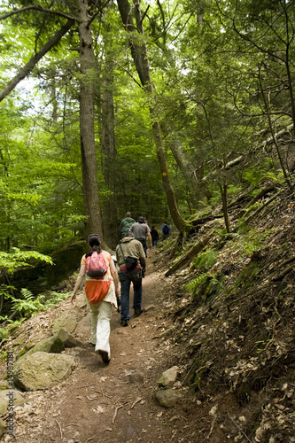 Hikers on a Trail in Forest