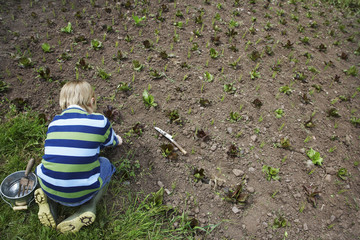 Boy 5-6 planting crops in field