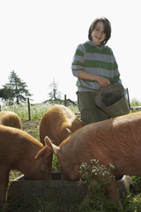 Boy 7-9 feeding pigs in sty
