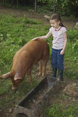 Girl 5-6 stroking pig in sty