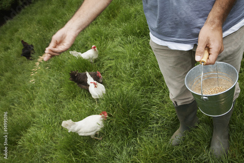 Man feeding hens in garden, low section, elevated view