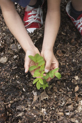 Girl 7-9 planting black locust tree seedling, close-up of hands and feet