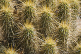 close up of cactus.