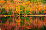 Fototapety Fall forest reflections