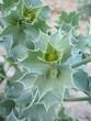 plante grasse cactée