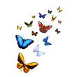 Leinwandbild Motiv Ein Dutzend Schmetterlinge
