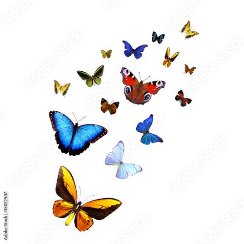 Staande foto Vlinder Ein Dutzend Schmetterlinge