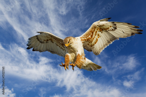 Fotobehang Eagle Ferruginous attack