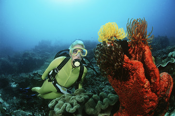 Raja Ampat, Indonesia, Pacific Ocean, female scuba diver swimming by coral reef