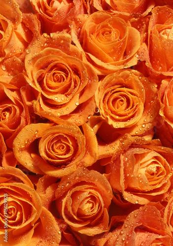 roses © fisz