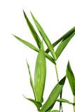 feuille de bambou 2