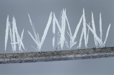 Ice needles on twig, close-up