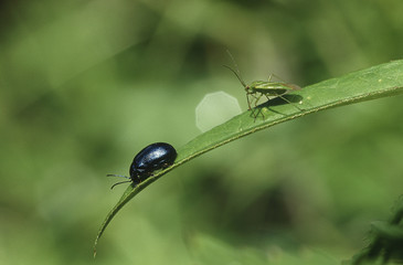 Two insects on blade of grass, close-up