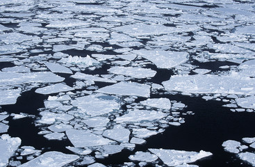 antarctica weddell sea ice floe