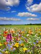 Leinwanddruck Bild - Fleurs de printemps