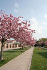 Mandelbäume im Kurpark