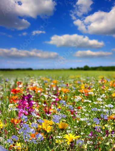 Leinwanddruck Bild Fleurs de printemps
