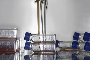Bottles on laboratory fridge shelf, close up