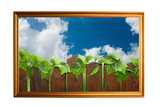 Picture of wood paling poster