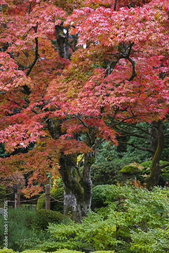 Japan, Nikko, Rinnoji Temple, Maple trees in Fall colors