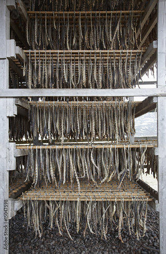 fish fillet hanging to dry
