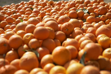 Pile of oranges, close-up