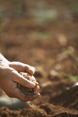 Man holding soil, close-up of hand