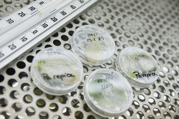 Leaves in petri dishes on lab shelf