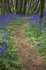 Purple Wildflowers on Path