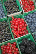 Fruits rouges : groseilles, mûres, cassis, myrtilles