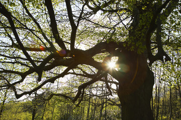 Sun Shinning Through Tree Branches