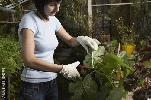 Greenhouse Worker Trimming Plant