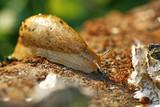Slug on the log poster