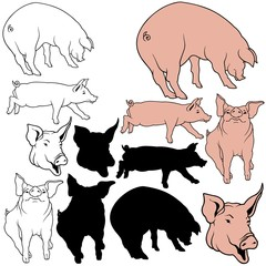 Pig Set 04 - colored hand drawn illustration